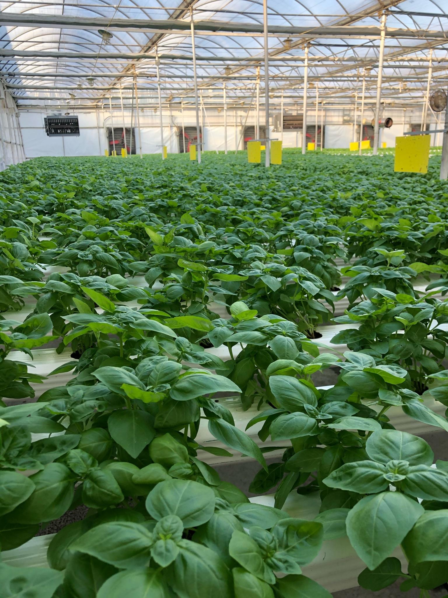 Farmlind Produce-GroRite