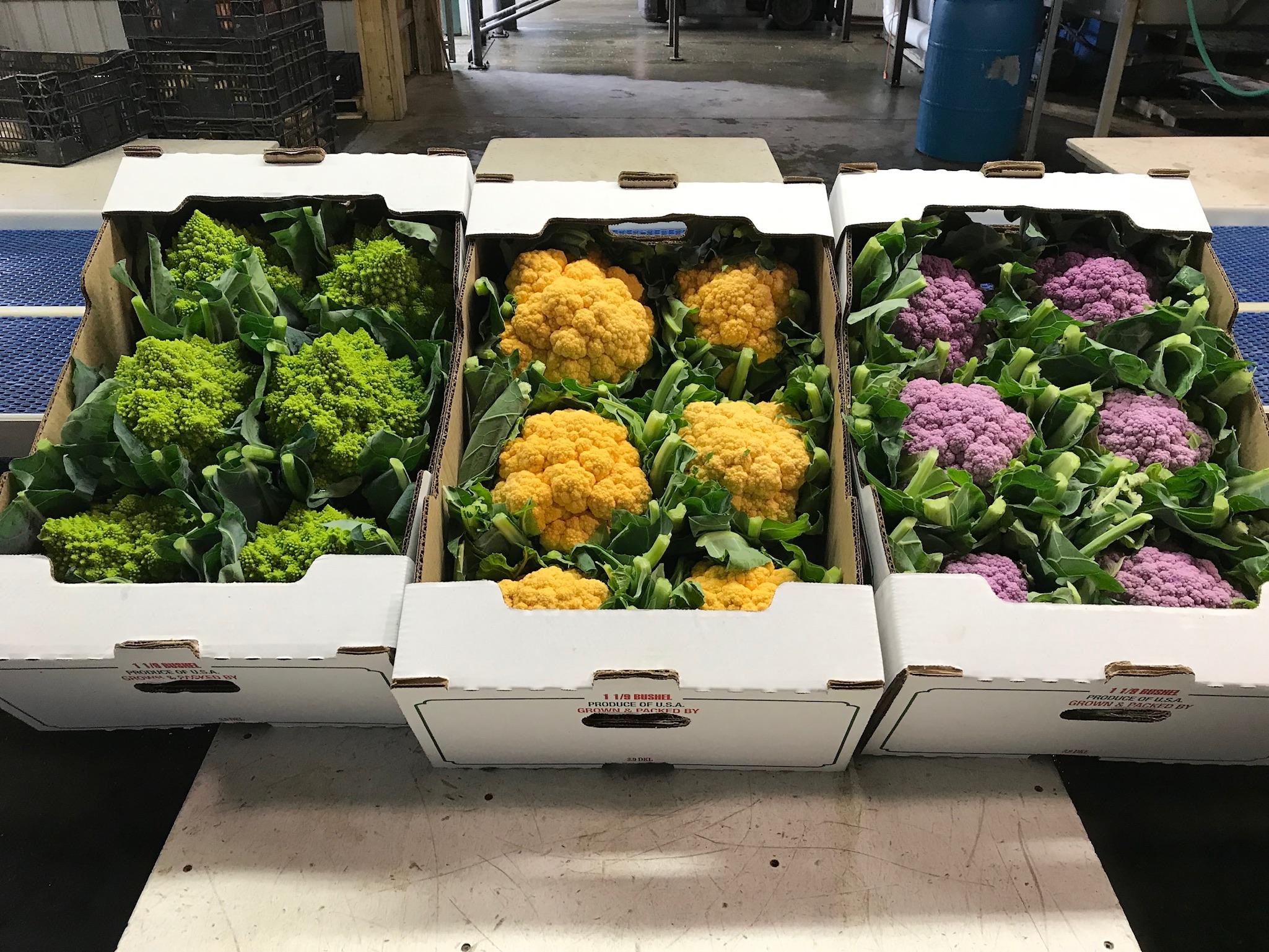 Farmlind Produce-Dottavio