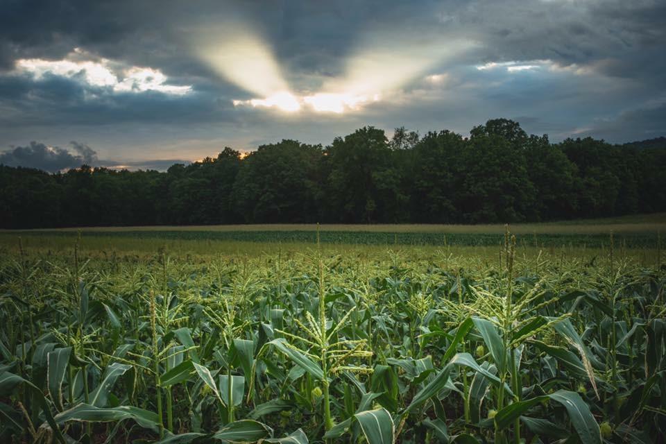 Farmlind produce 24 hour fresh program
