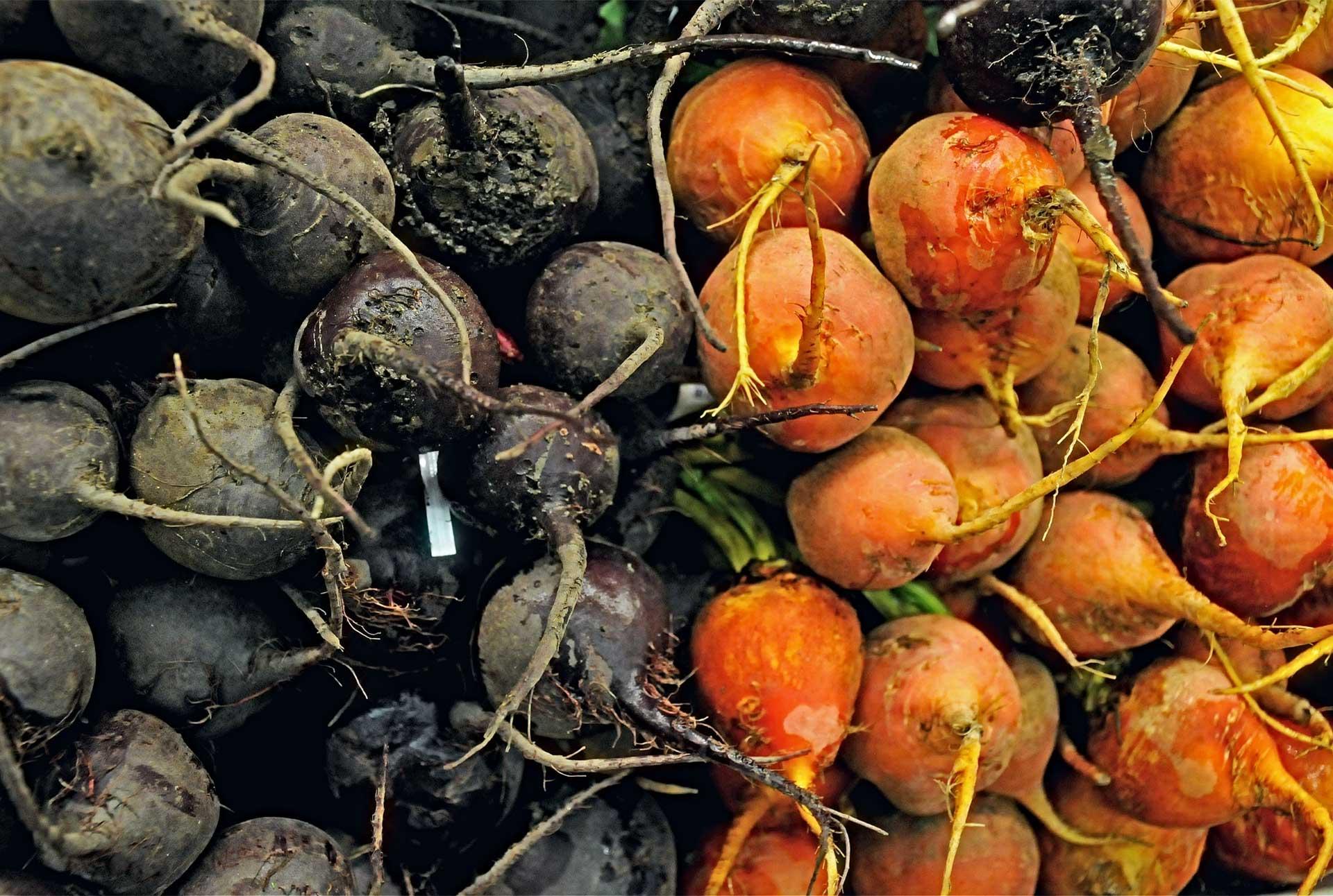 Farmlind Produce-Dagele Farms