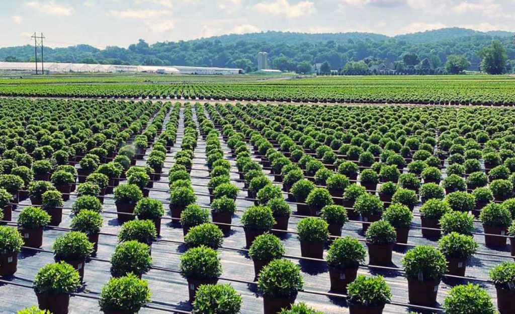 Farmlind Produce - Gro-Rite