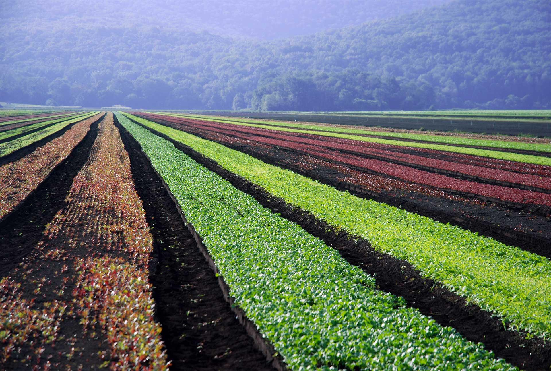 Farmlind farm