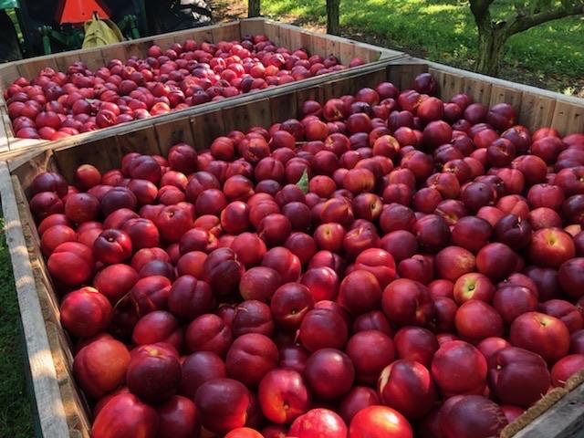 Farmlind Produce-Fralinger
