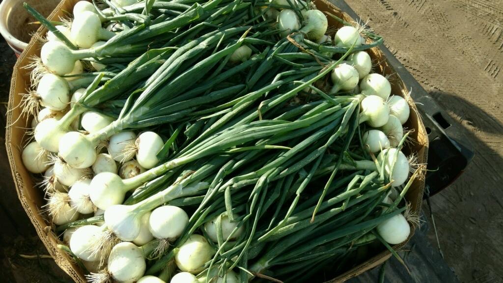 Farmlind Produce-Farmer Mike's