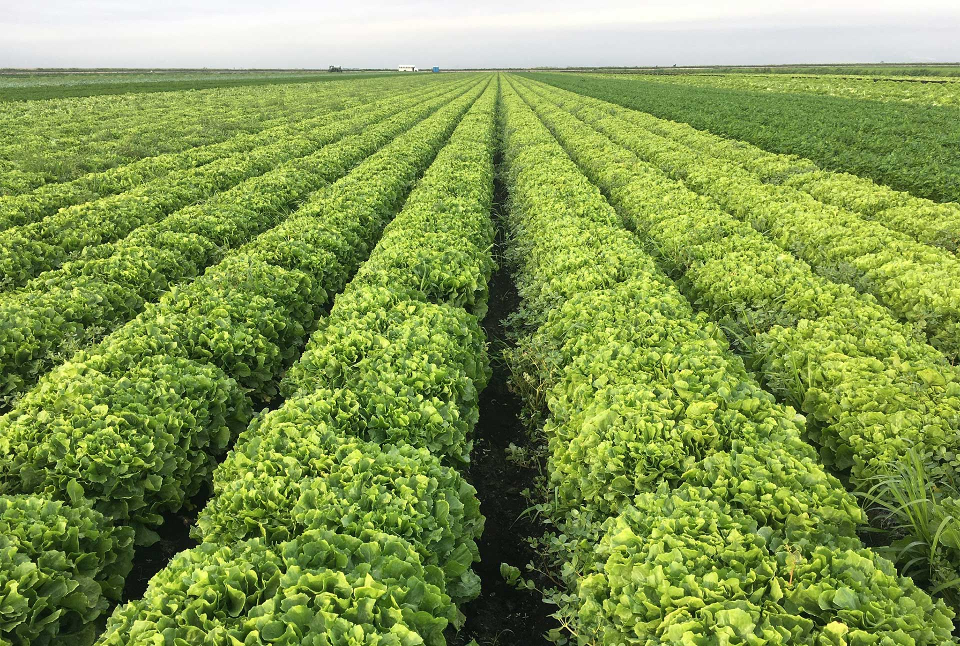 Farmlind Produce-Bottomley Farms
